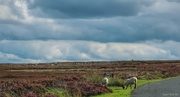 3rd Sep 2020 - North York Moors