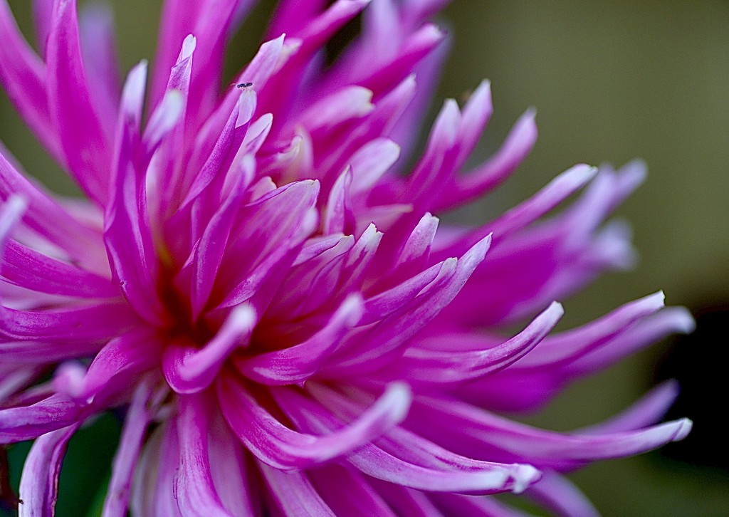 In the Pink by carole_sandford