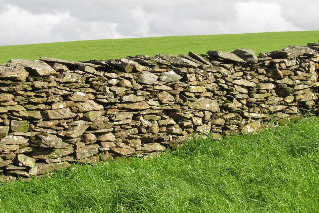 fields of green by anniesue