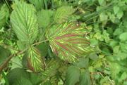 3rd Sep 2020 - corduroy leaves
