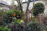 2nd Sep 2020 - Memorial Garden