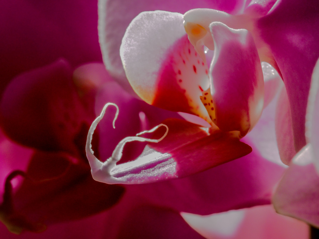 Orchid by tosee