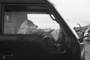 4th Sep 2020 - Dogs in cars