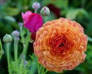 4th Sep 2020 - Spring Flowers P9040028