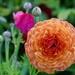 Spring Flowers P9040028 by merrelyn