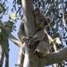 I love me a soft pillow by koalagardens