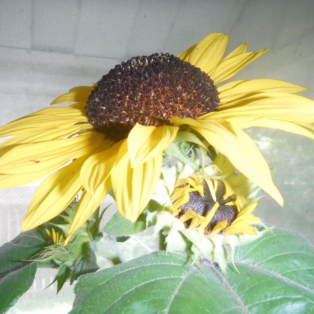 New Bloom! by spanishliz
