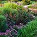 Hampton Park Gardens