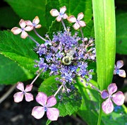 4th Sep 2020 - Another bee
