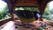 4th Sep 2020 - Bird cam capture.