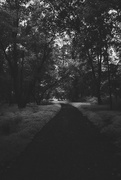 4th Sep 2020 - Path Through The Woods