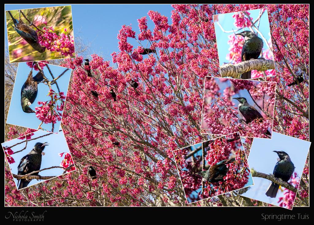 Springtime Tuis by nickspicsnz
