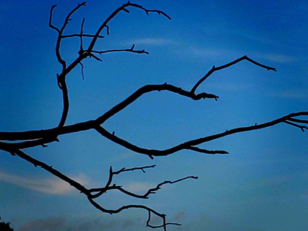 Leafless  by skipt07