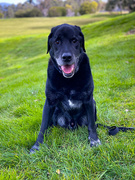 5th Sep 2020 - Doggo portrait