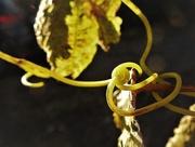 1st Sep 2020 - Vine knot