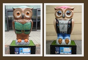 5th Sep 2020 - Owls 2