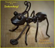 5th Sep 2020 - Good news it is Saturday..   (Best on black)