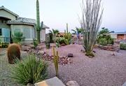 5th Sep 2020 - Desert Landscaping