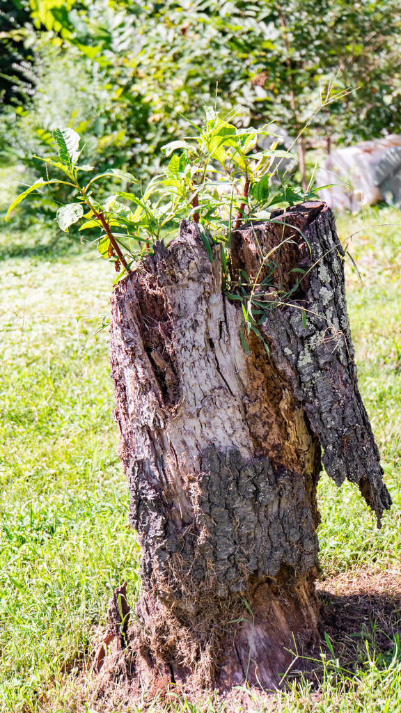 Stump by randystreat