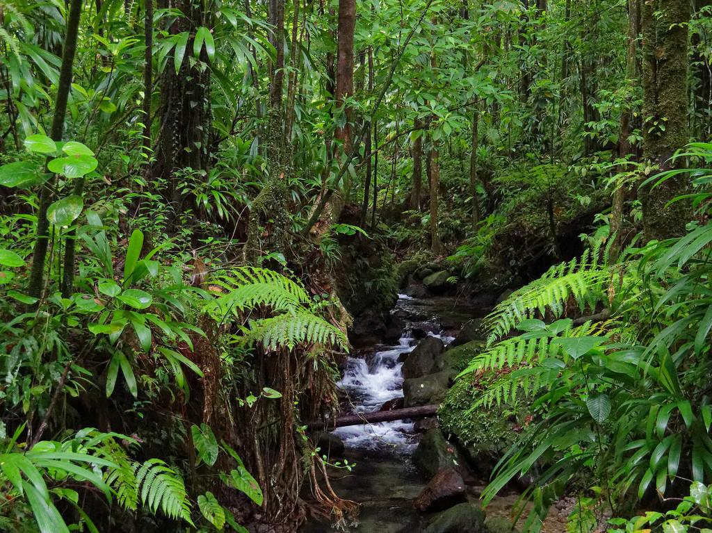0905 - Rain Forest by bob65