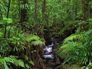 5th Sep 2020 - 0905 - Rain Forest