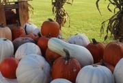 5th Sep 2020 - Pumpkins galore!