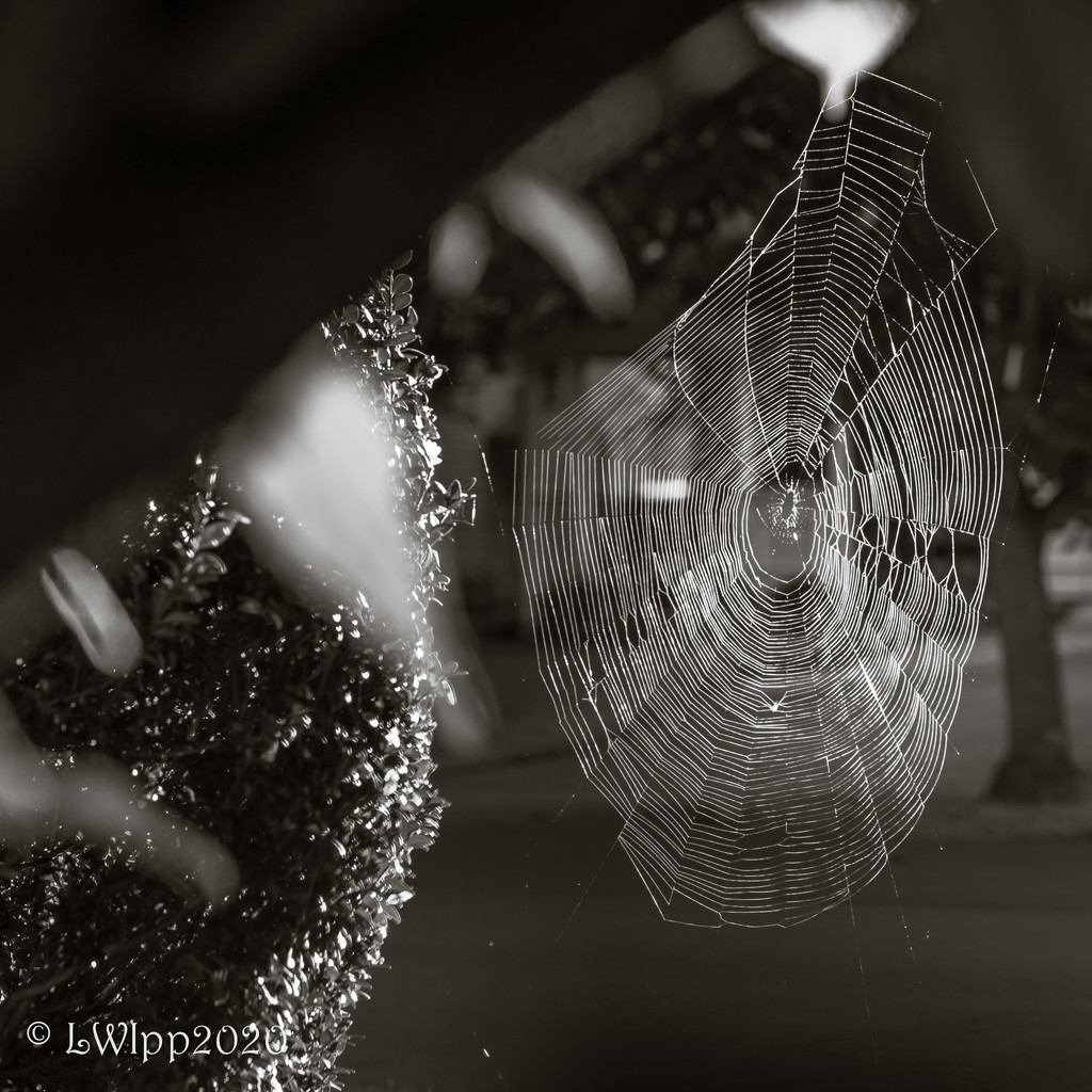 Oh, What A Tangled Web We Weave by lesip
