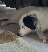 5th Sep 2020 - Tired girl!