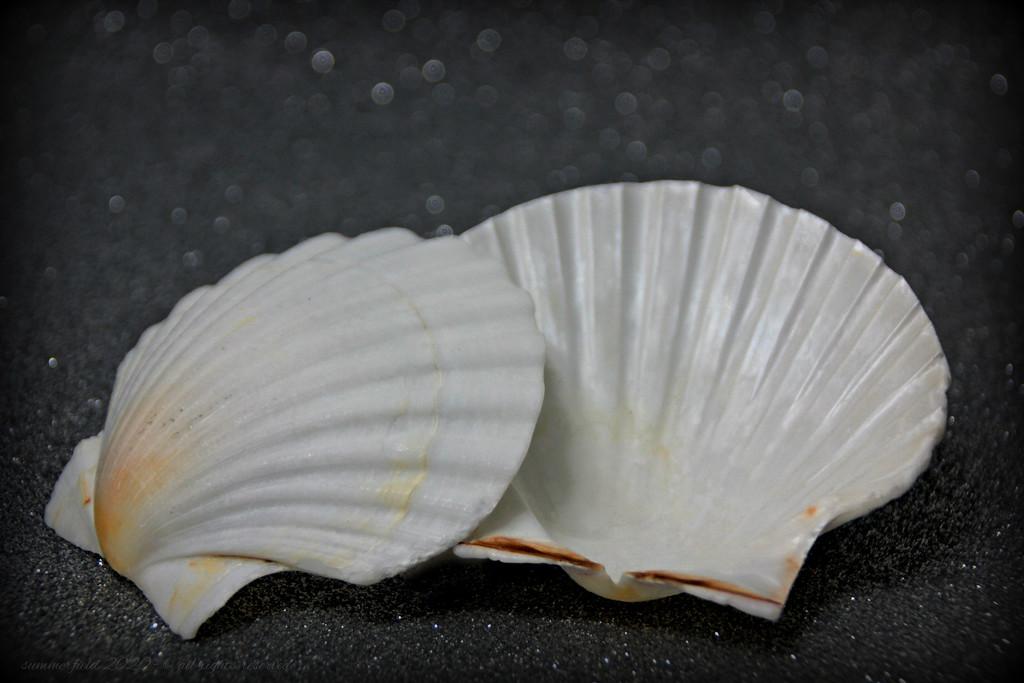 shells by summerfield