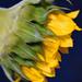 Sunflower side
