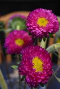 5th Sep 2020 - Three circular flowers