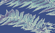 3rd Sep 2020 - Get Pushed 423 - Anna Atkins's cyanotypes - Tree Fern