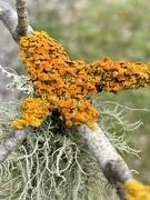 6th Sep 2020 - Luscious Lichen