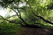 6th Sep 2020 - Sept 6th Trees