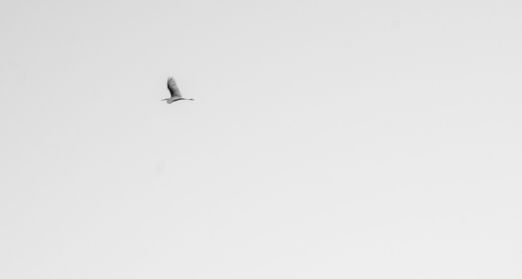 Heron by bmaddock