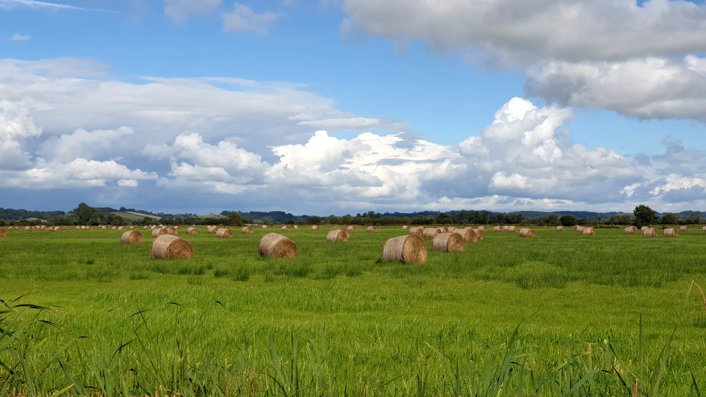 All baled up for the winter by julienne1