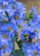 6th Sep 2020 - Don't Bee Blue