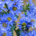 Don't Bee Blue by kvphoto