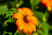 6th Sep 2020 - Name That Flower