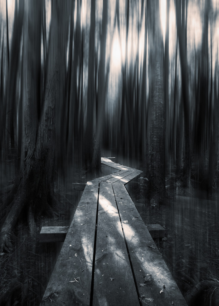 Stay On The Path by rosiekerr