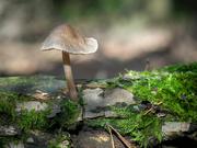 6th Sep 2020 - A mushroom