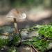 A mushroom by haskar