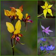 7th Sep 2020 - Spring Wildflowers