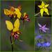 Spring Wildflowers by merrelyn