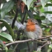 Dear little robin by rosiekind