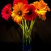Bouquet #1 by shutterbug49
