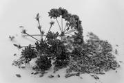 7th Sep 2020 - Seeds sooc
