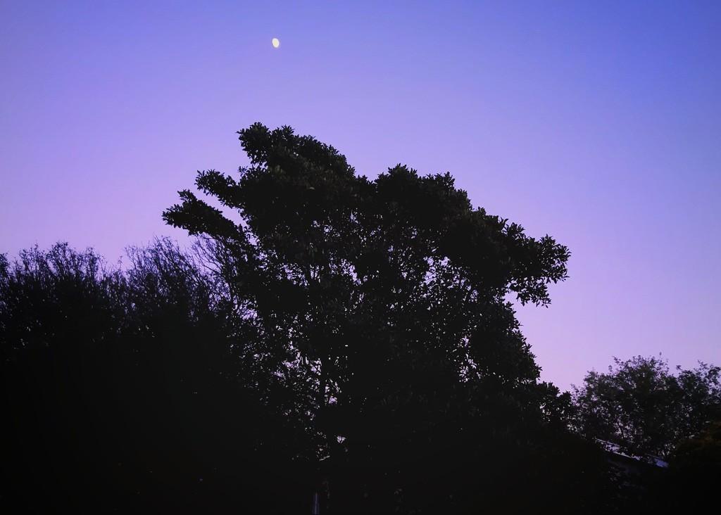 Morning Moon  by salza
