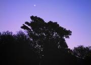 7th Sep 2020 - Morning Moon