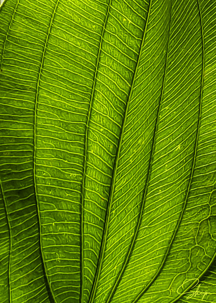 Textures and Patterns of Nature by skipt07